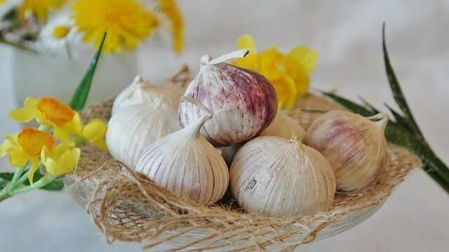 11 Amazing Health Benefits of Garlic