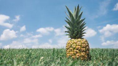 Pineapple in field