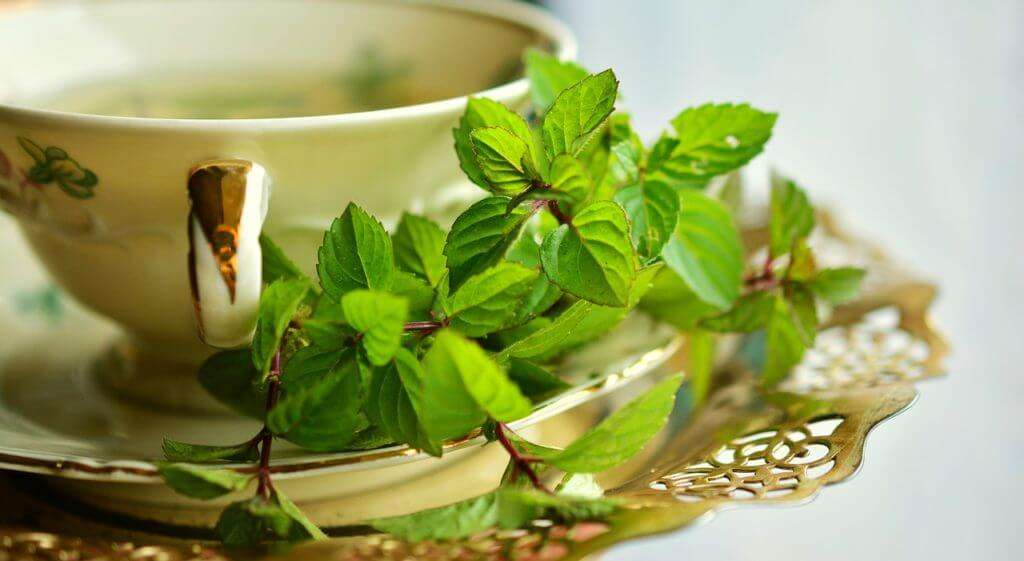 green tea for a memory boost and focus