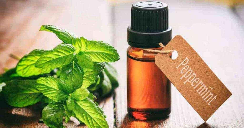 Peppermint Oil Leaves